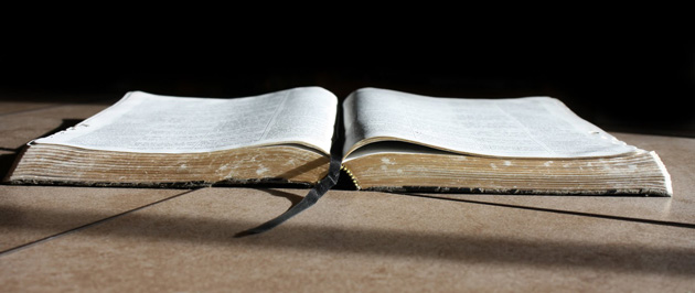 The Bible - The Happy Llama Translation