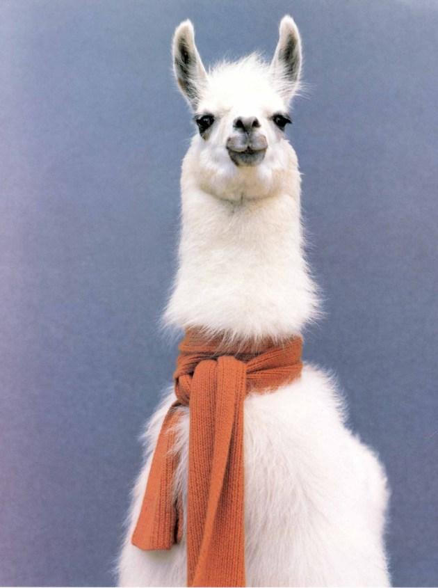 Awesome hipster llama